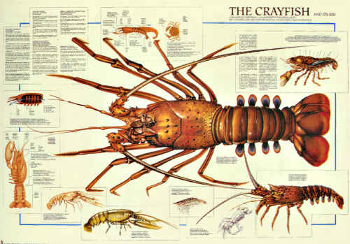 figuring out craws without a cray